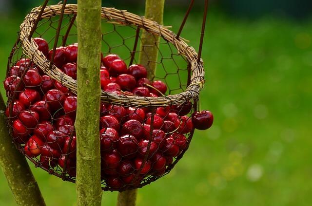 cherries-